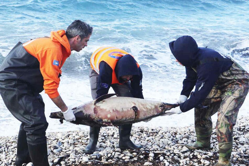 Tote Delfine an Land gespült: Ist dieses unglaubliche Manöver schuld?