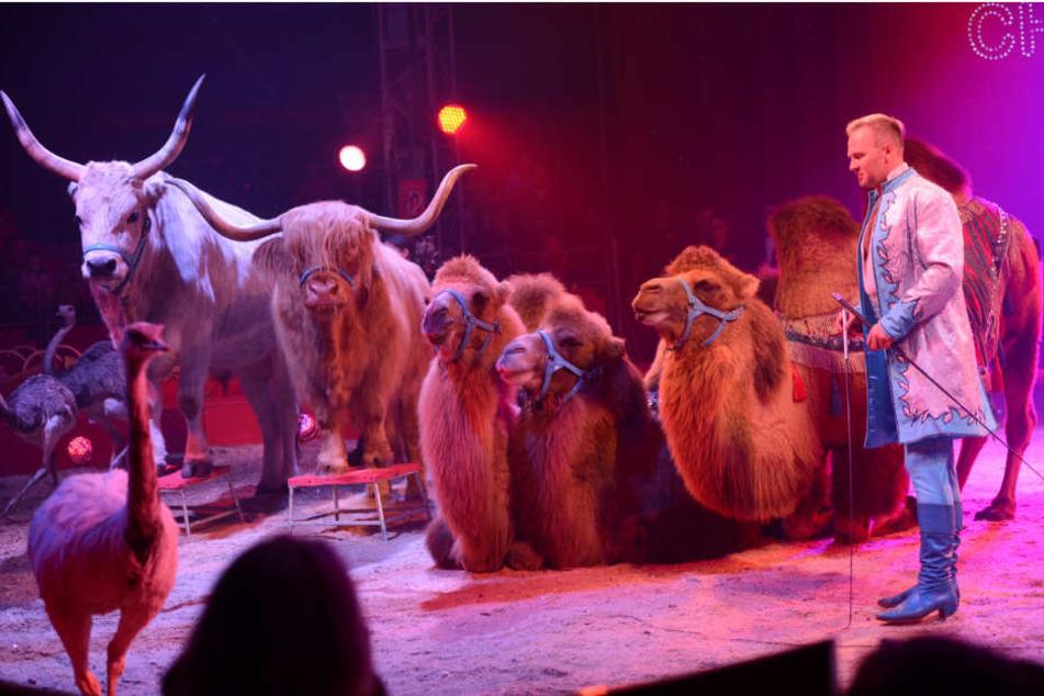 Zirkus Köln Heute