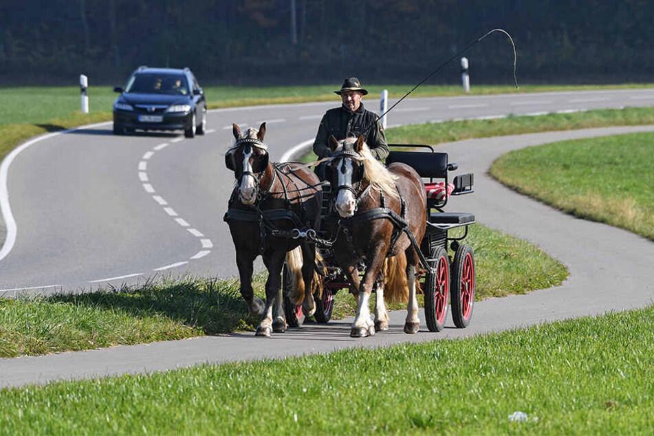 Nach einem tödlichen Kutschen-Unfall in Querfurt fordern Tierschützer ein Fahrverbot im Saalekreis (Symbolbild).