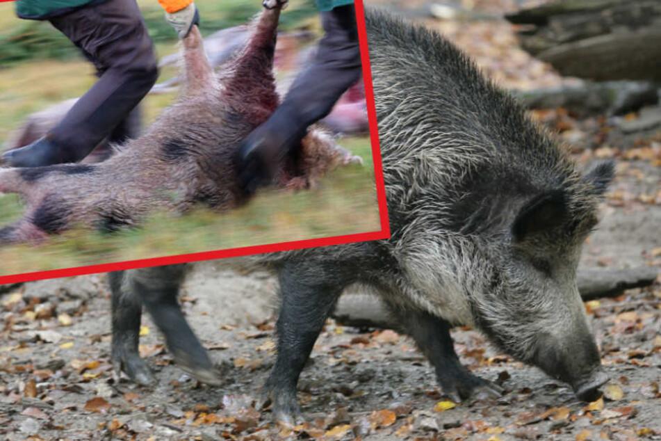 Das wild gewordene Tier wurde schließlich erschossen (Symbolfoto).