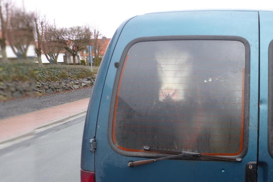Polizisten können nicht glauben, wer sie aus einem Kofferraum heraus anstarrt