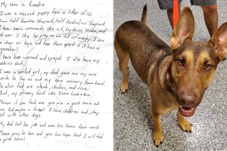Abandoned dog has a note on her collar with heartbreaking message