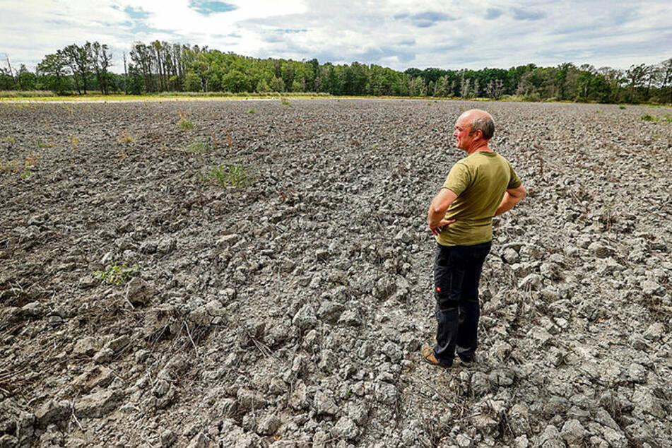 Ein Drama für das Karpfenland: Sachsens Fischteiche trocknen aus