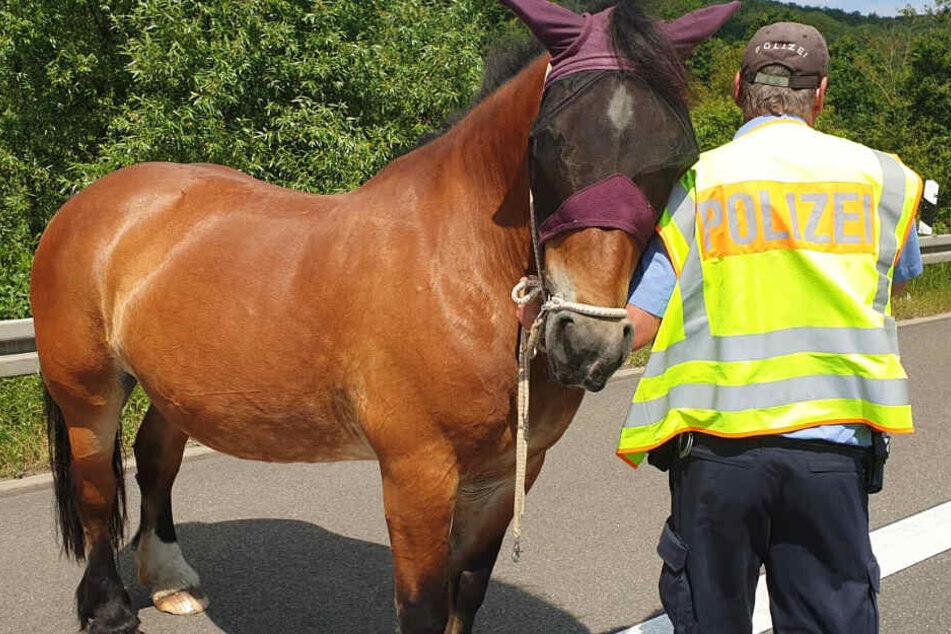 Polizei in Alarm: Drei Pferde auf der Autobahn