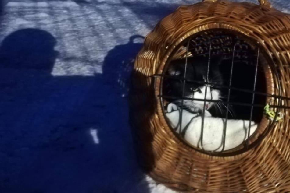 Bei Frost und tödlicher Kälte: Zahnloser Kater herzlos vor Tierheim ausgesetzt
