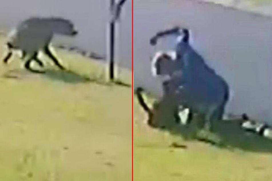 Grausames Video: Mann prügelt brutal auf hilflosen Hund ein