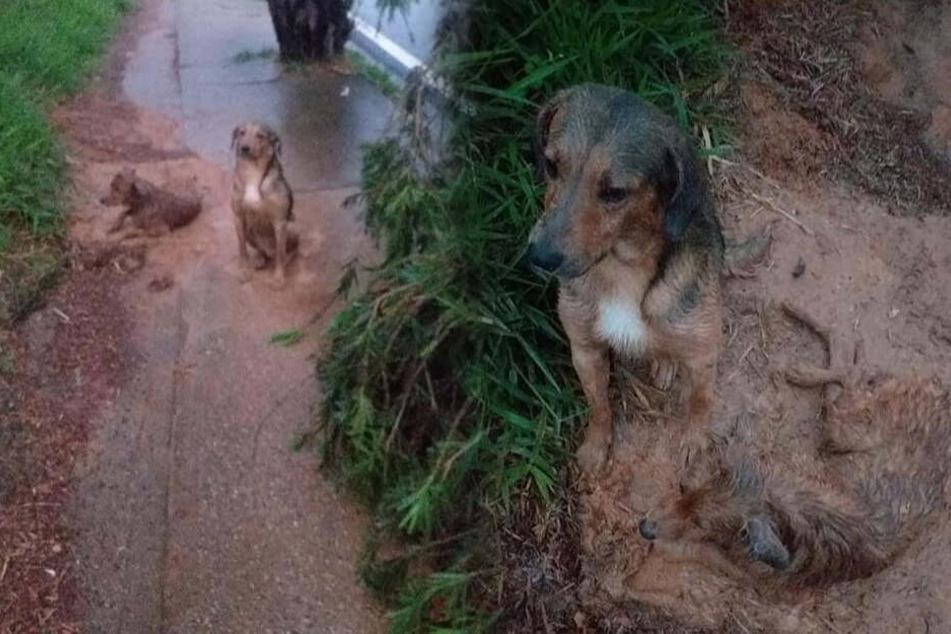 Hund wird angefahren, doch sein Freund lässt ihn nicht im Stich