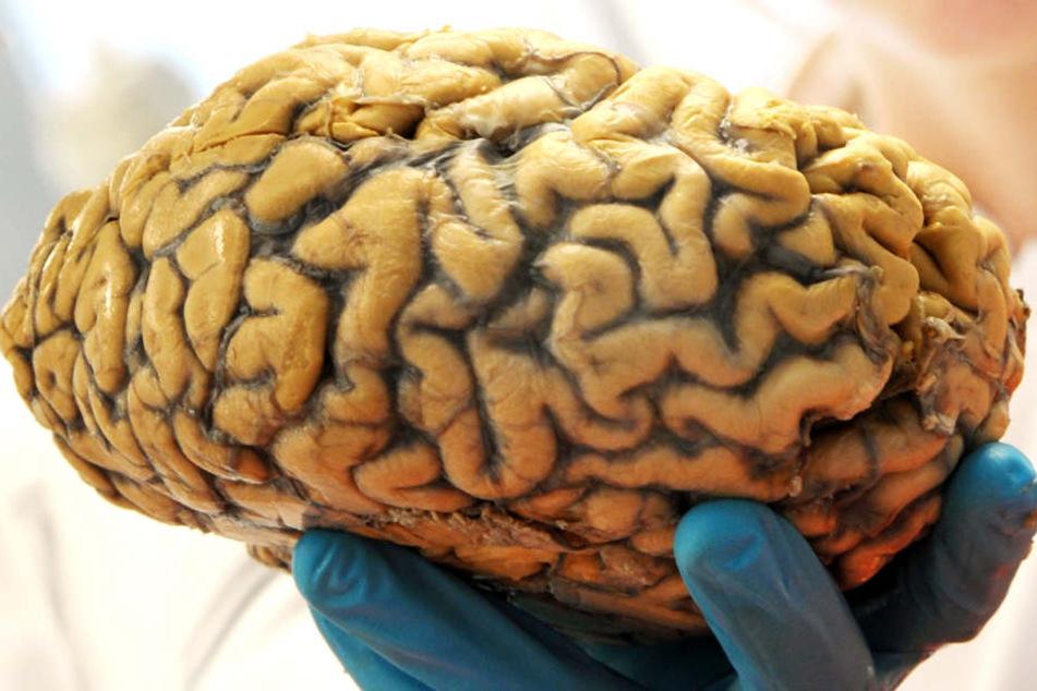 Forscher der LMU München konnten magnetische Kristalle im Gehirn nachweisen.