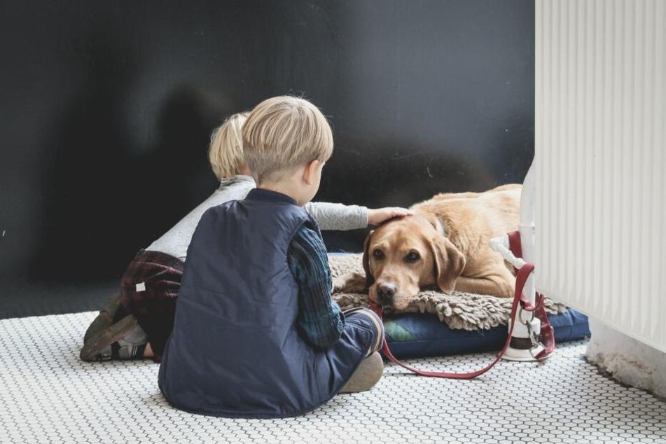 Nicht jeder Hund eignet sich zum Familienhund.