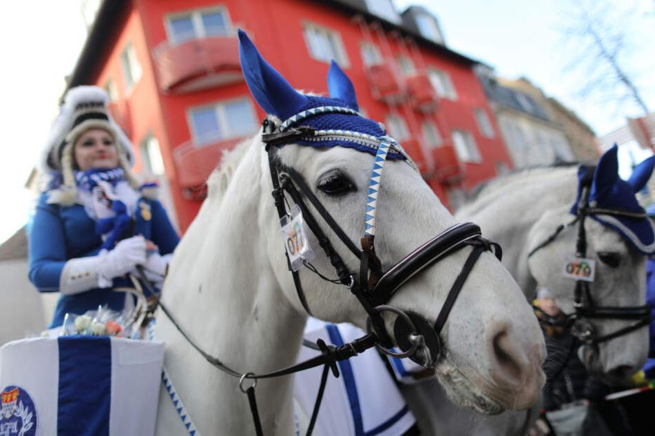 Beim Kölner Rosenmontagszug 2019 wird es keine Pferde geben (Archivbild).