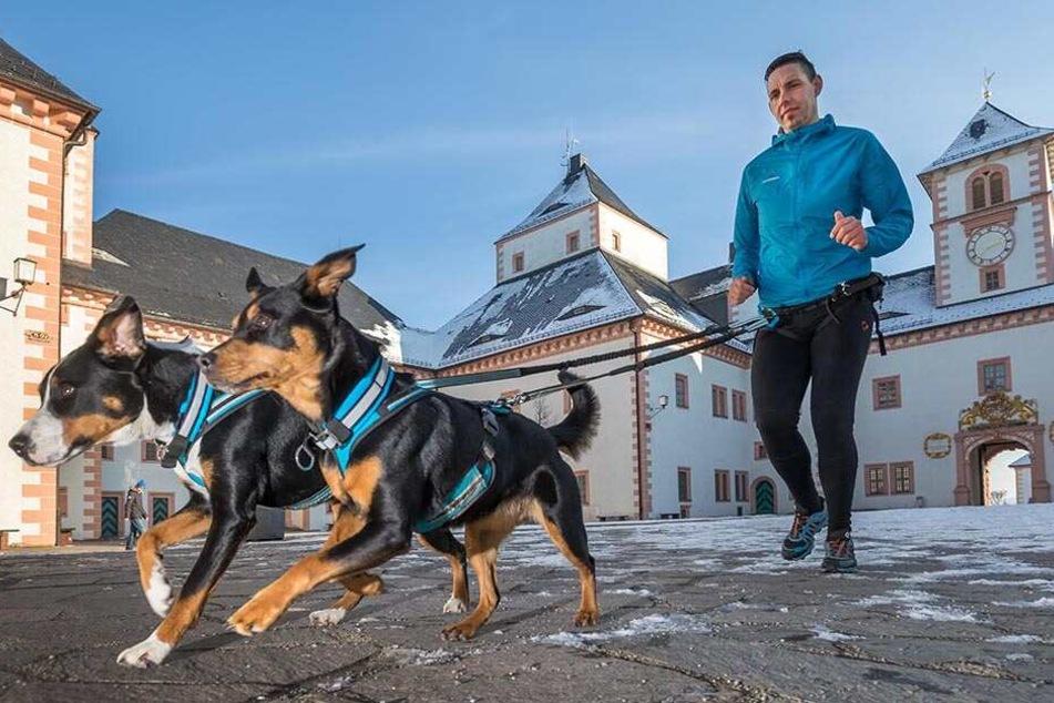 Sascha Winkler (31) mit seinen Hunden Elinor (3) und Bella (7, r.) am Schloss Augustusburg, dem Ziel des Canicross-Berglaufs.