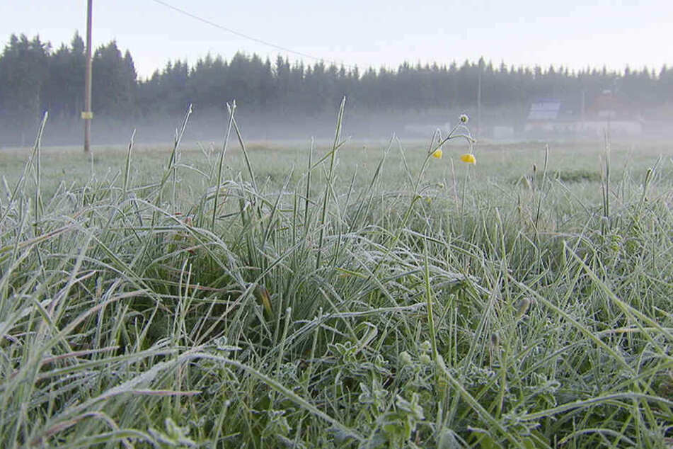 Am Samstagmorgen rutschte das Thermometer auf minus 26 Grad in Kühnhaide.