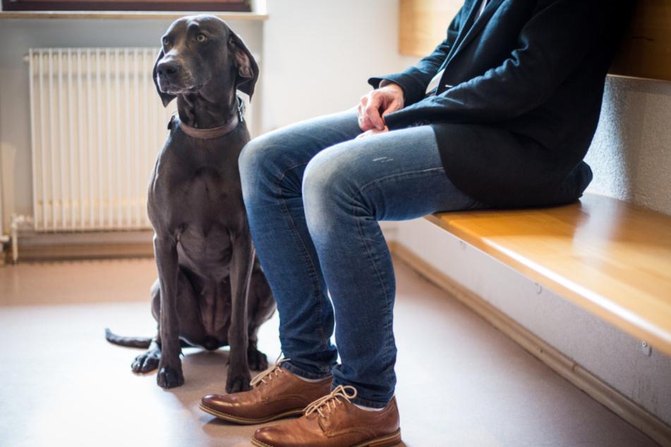 Lange Wartezeiten beim Tierarzt sollte man nach Möglichkeit vermeiden. (Symbolbild)