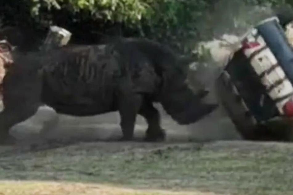 Schock im Serengeti-Park! Nashorn schleudert Auto umher