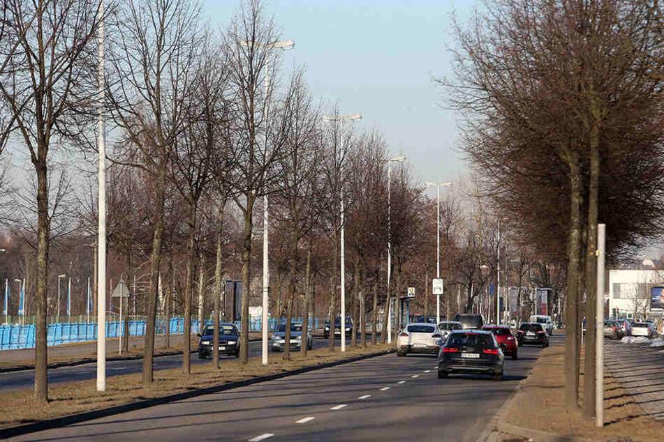 Alleen wie in der Neefestraße sollen in Chemnitz demnächst häufiger gepflanzt werden.