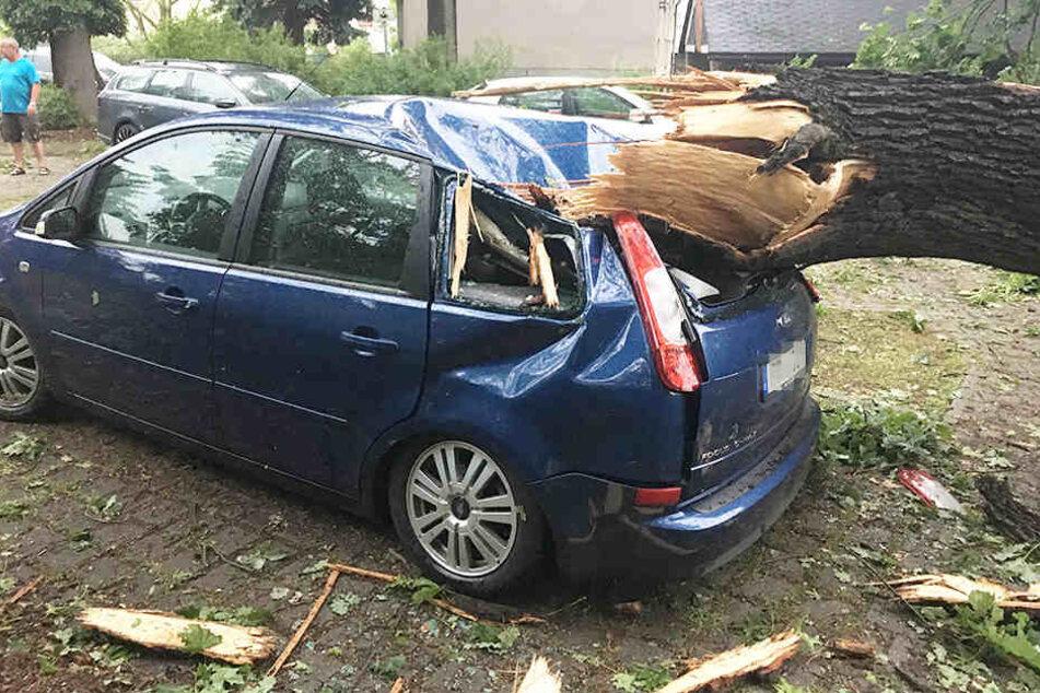 In Königsbrück erwischte es auch mehrere Autofahrer. Viele Bäume wurden zur Gefahr.