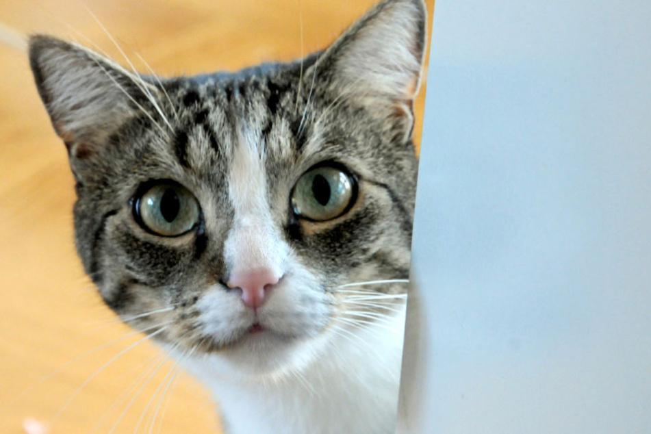 Die Katze öffnete die Wohnungstür mit einem Sprung auf die Klinke.