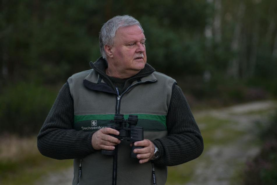 Er kennt seine Platzhirsche: Dirk Synatzschke (60) ist Mitarbeiter für Gebietsentwicklung in der Naturschutzgebietsverwaltung der Königsbrücker Heide im Sachsenforst.