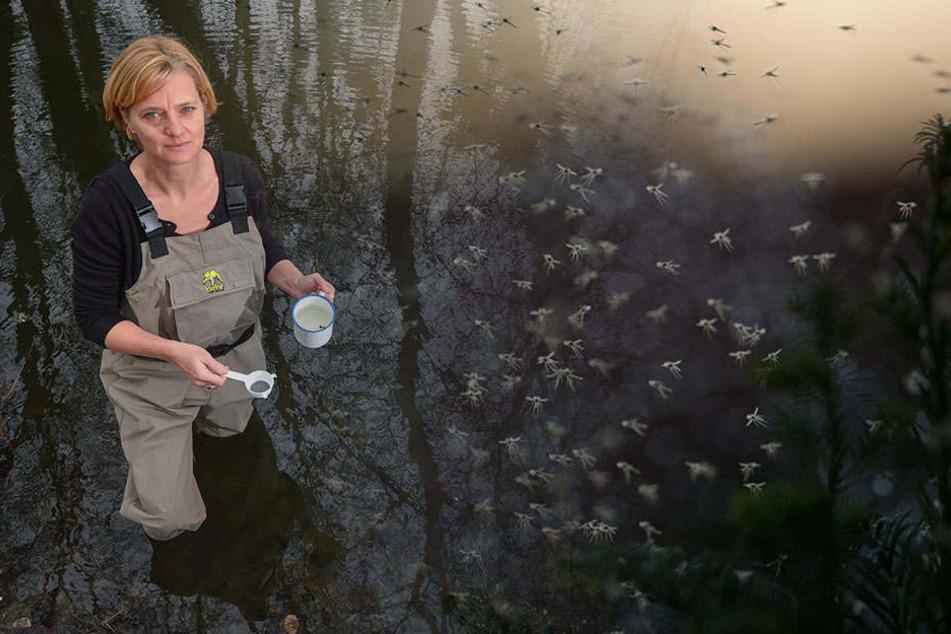 Doreen Walther sammelt in einem kleinen Tümpel Mückenlarven und untersucht diese anschließen und dem Mikroskop.