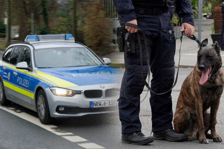 Hund stellt Dieb auf der Flucht, doch das war noch nicht alles