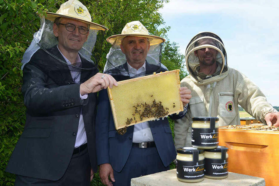 """Zwickauer """"Werkbienen"""" liefern jetzt auch VW-Honig"""