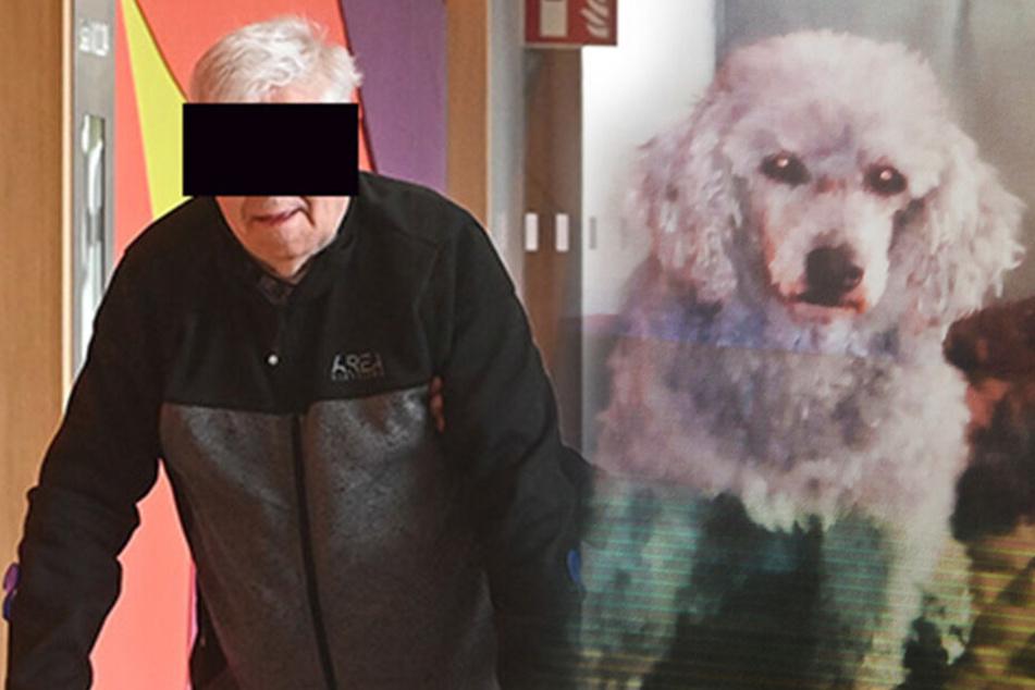 Rentner (82) ließ seinen Pudel völlig verwahrlosen
