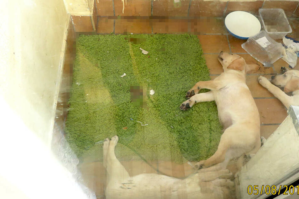 Auf dem Boden lag jede Menge Kot herum. Erstaunlich, dass es den Tieren gut ging.