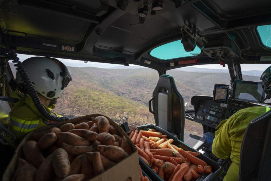 Helfer werfen Gemüse aus einem Hubschrauber ab.