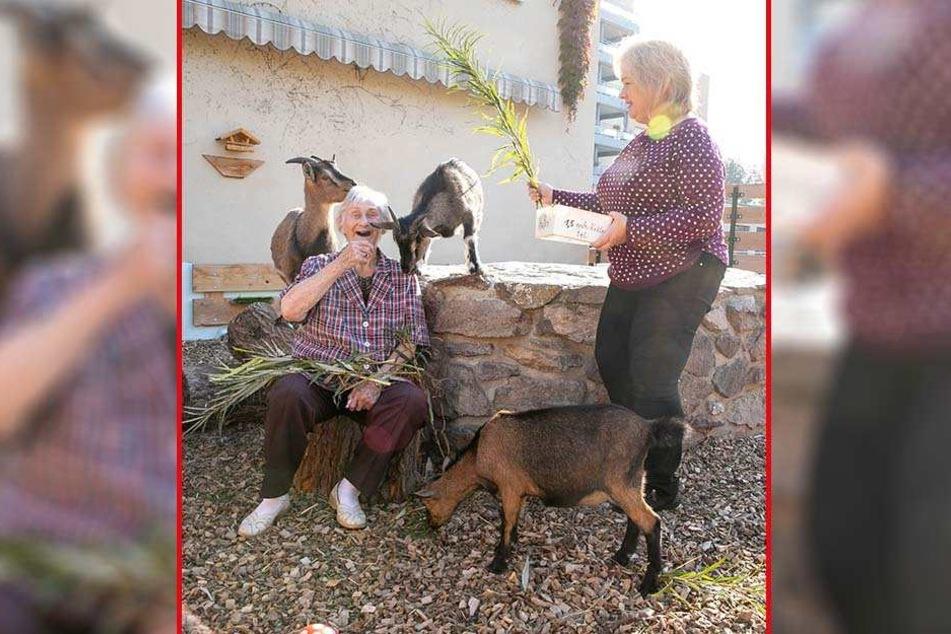 Seniorenheim mit eigenem kleinen Tierpark: Bewohnerin Anneliese Dürfeld (90) und die ehrenamtliche Mitarbeiterin Antje Ackermann (56) füttern die Zwerg- und Waldziegen Anna, Bert und Carl.