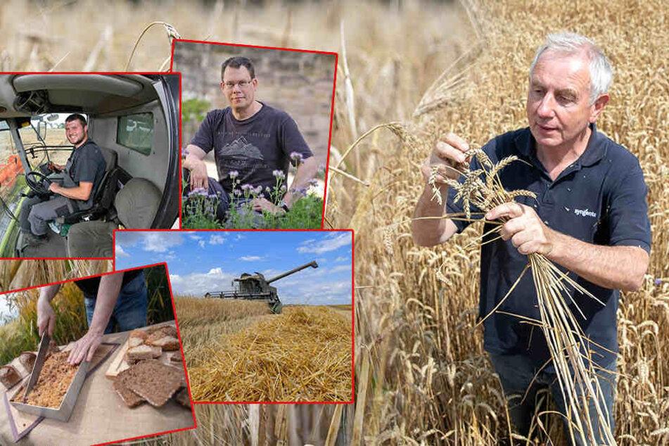 Ernteschlacht! Sachsens Getreidebauern machen gerade Überstunden