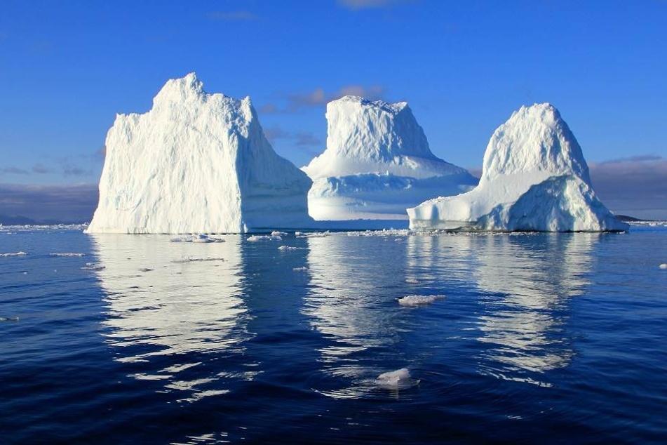 Majestätisch ziehen die Gletscher durch den Fjord.