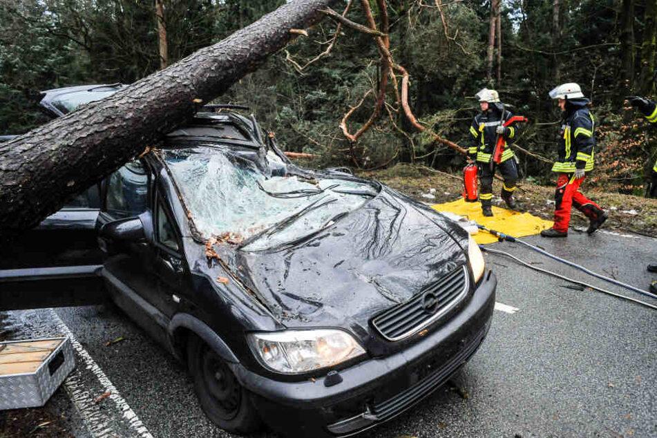 Auf der Lämershagener Straße in Bielefeld stürzte ein Baum auf ein Auto.