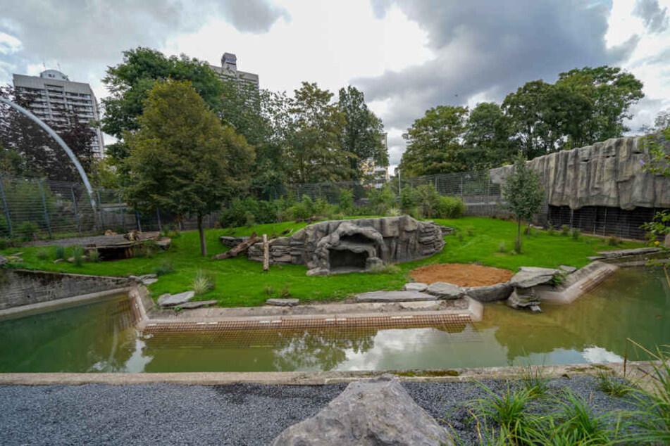 Die umgebaute und sanierte Anlage für die Asiatischen Löwen im Kölner Zoo.