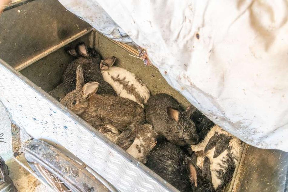 Ein Kaninchen hatte es nicht geschafft. Bei den anderen elf weiß man noch nicht genau, ob der Rauch Schäden hinterlassen hat.