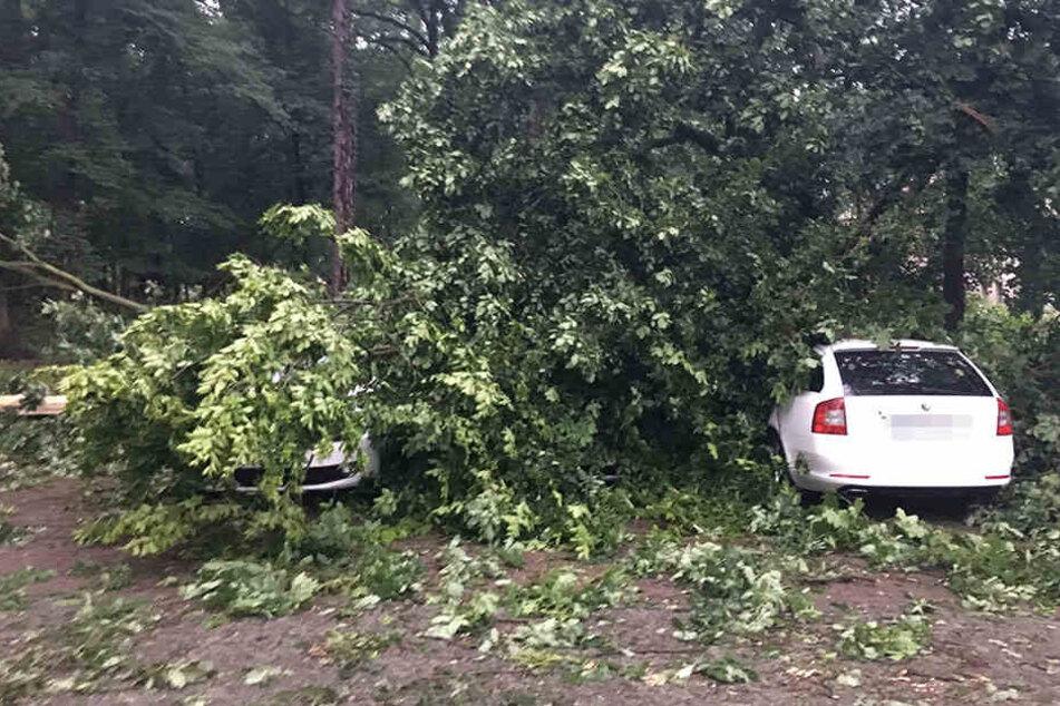 Hier wurden zwei von drei Autos unter umgestürzten Bäumen begraben.