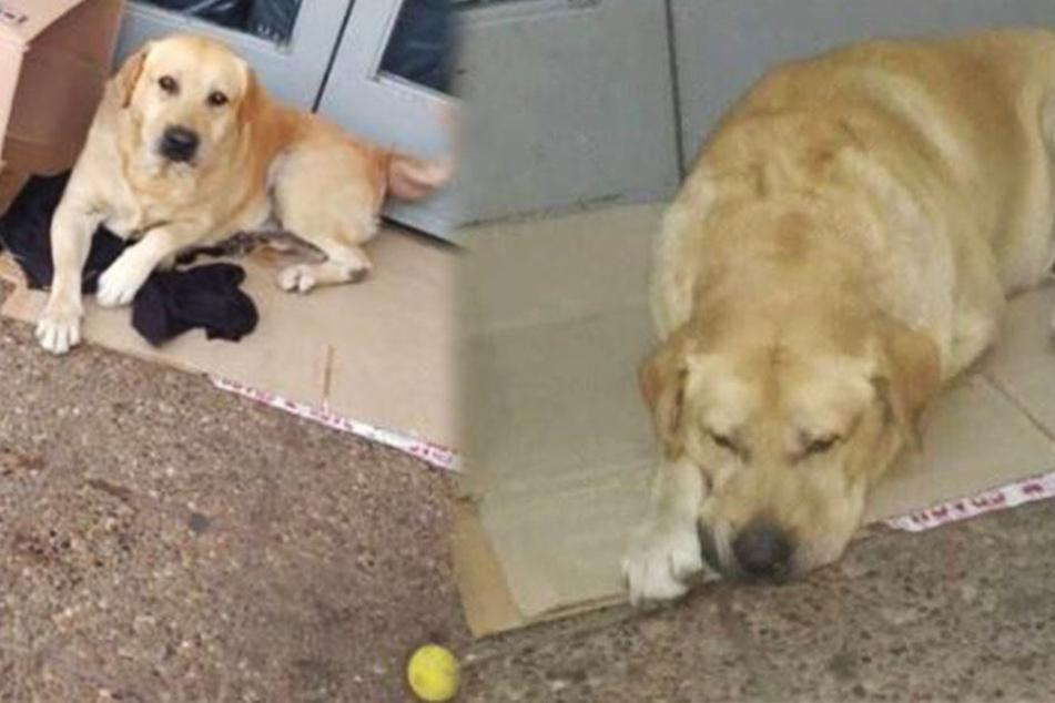 Hund wartet seit über einer Woche vor Krankenhaus auf sein totes Herrchen