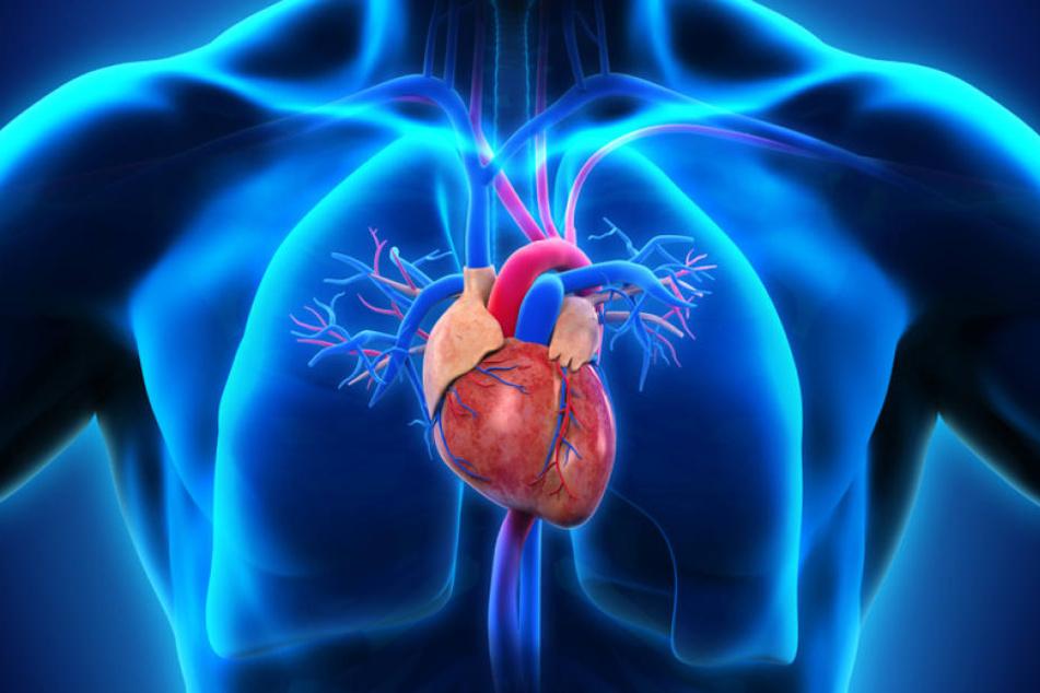 Wie bei einem Auto ist das Herz unser Motor.
