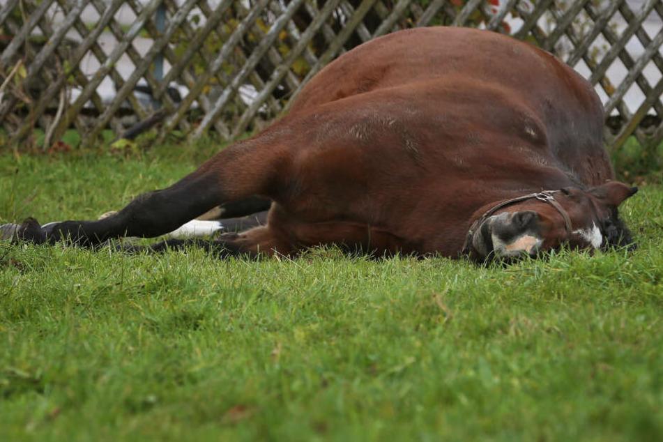 Pferd mit Hammer auf Kopf geschlagen! Polizei sucht Tierquäler