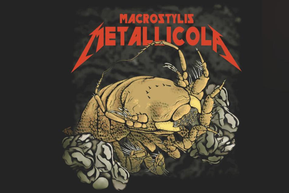 Die Grafik zeigt die Krebsart Macrostylis metallicola, die nach der US-Rockband Metallica benannt wurde.
