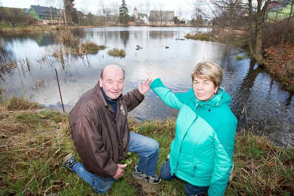 Manfred (74) und Sonja Hunger (71) kennen die Schwanenfamilie vom Timmelteich in Großhartmannsdorf genau.