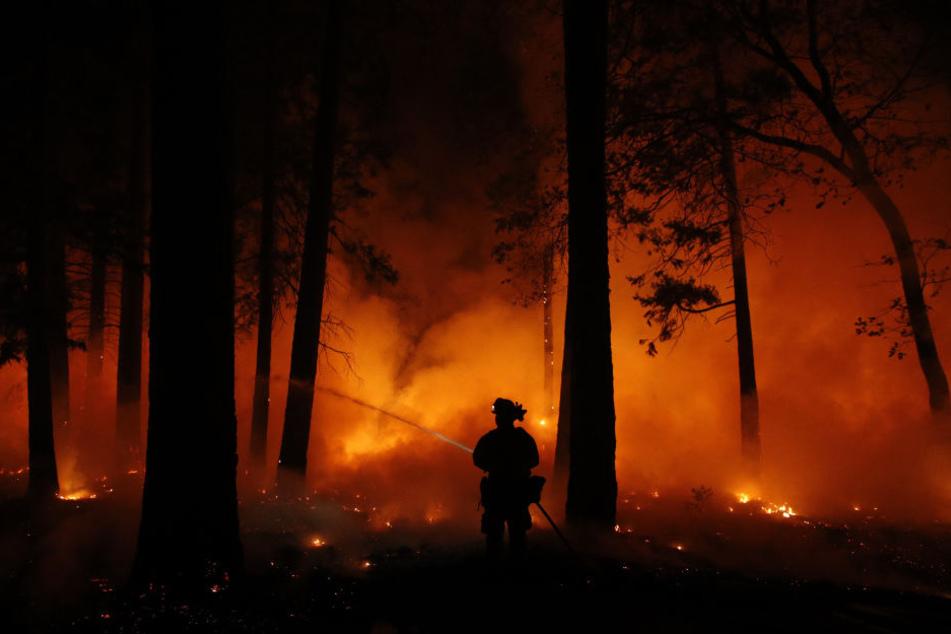 Die Waldbrände haben in Kalifornien bereits eine katastrophale Spur der Verwüstung hinterlassen.