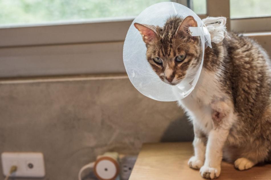 Insgesamt zwei Jahre lang war die Katze verschwunden (Symbolfoto).