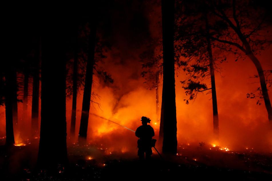 Auch das Haus des Entertainers wurde Raub der Flammen bei den schweren Bränden in Kalifornien dieses Jahr.