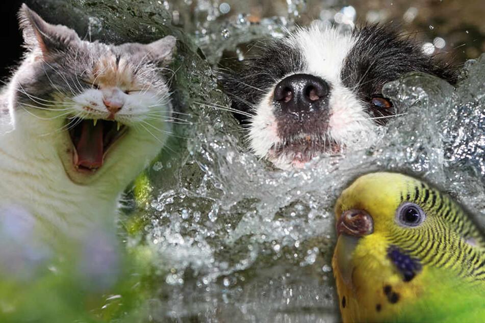 Auch Haustiere bekommen bei der Hitze 'ne Meise!