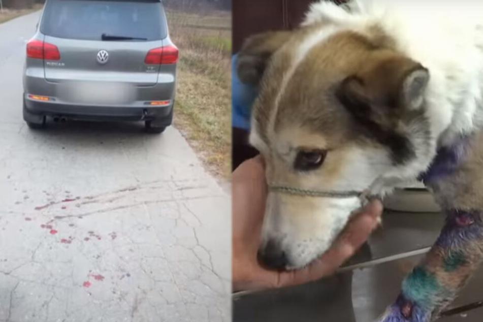 Direkt hinterm VW sah man das Blut. Barsik wurde zum Glück gerettet.