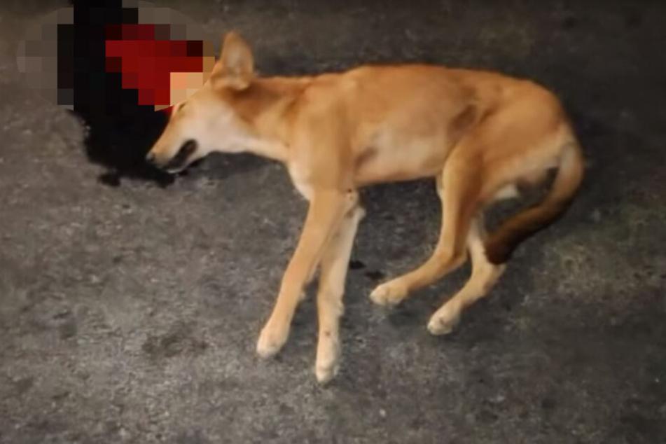 Hund liegt nach Unfall leblos da, dann zückt einer sein Handy