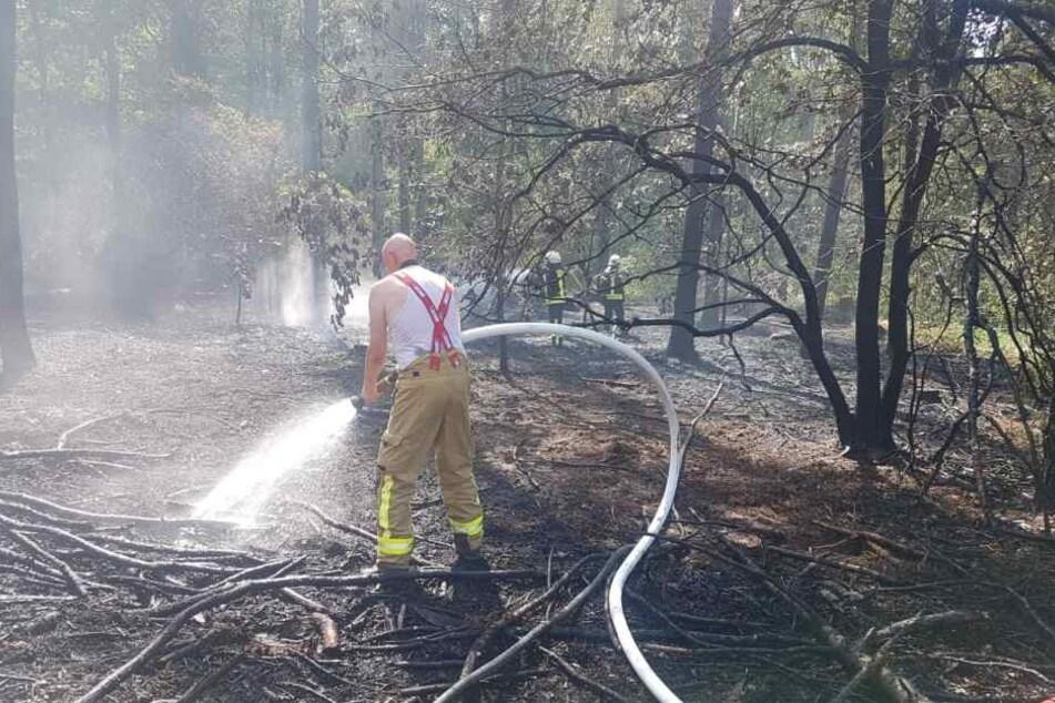 Feuerwehrmänner löschen den Brand im Thümmlitzwald. Hier war am Mittwochnachmittag aus unbekannter Ursache ein Feuer ausgebrochen.