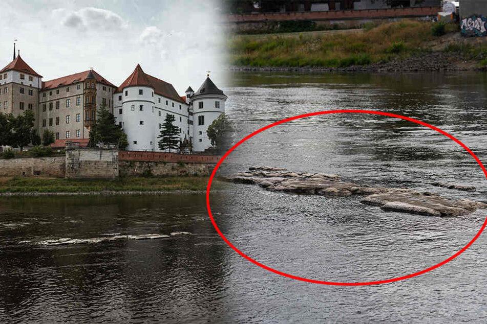 """Auch unterhalb des Schlosses Hartenfels in Torgau ist die Elbe deutlich """"ausgedünnt"""". Sogenannte """"Hungersteine"""" tauchen wieder auf."""