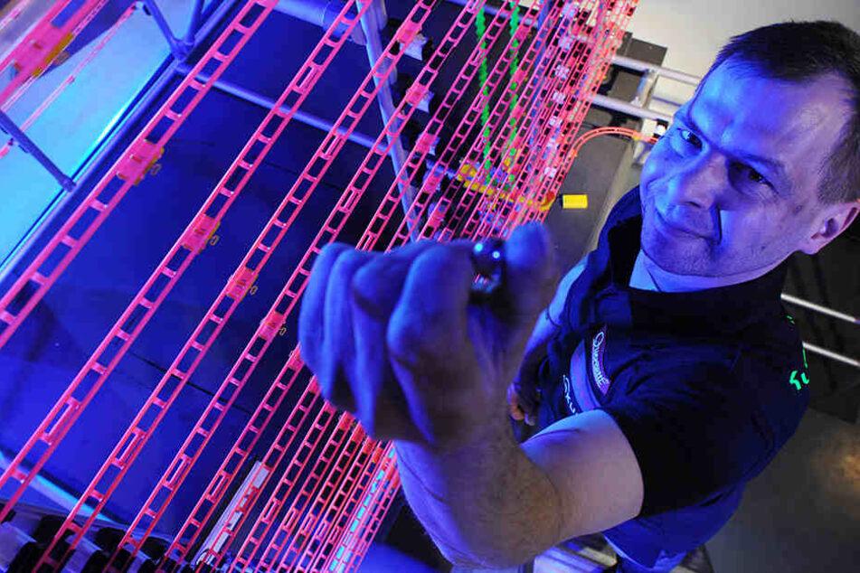 Klaus Peter Beier hat 2012 noch Kugeln über einer Strecke von 649,38 Metern rollen lassen - Weltrekord.