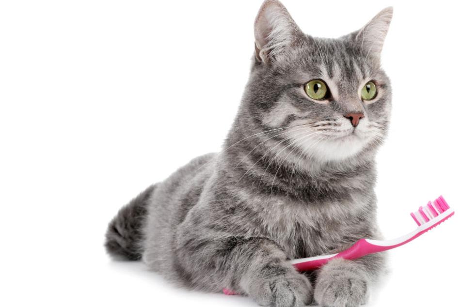 Muss man Katzen Zähne putzen? 5 tierische Tipps zur Zahnpflege